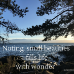 Small beauties fill life with wonder